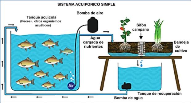 Adriana da silva docente y maestra en acuacultura for Tanques para cria de peces