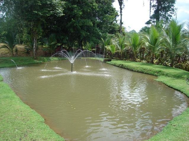 estanque-tilapia